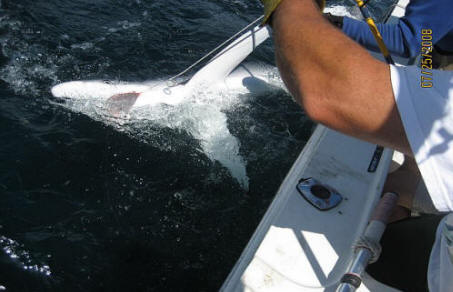 Oregon Coast Blue Shark Fishing