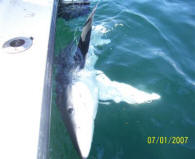 Ocean Shark Fishing Trips