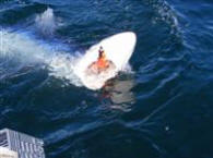Fighting Blue Shark Fishing Oregon Coast